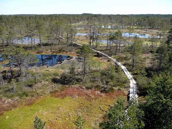 Ландшафт болотный